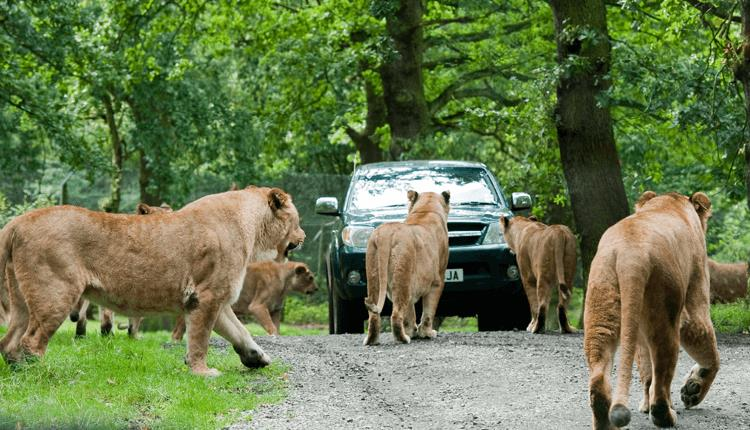 Knowsley safari park - Birmingham taxi